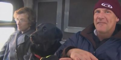 Лабрадор самостоятельно возит себя в общественном транспорте на прогулку