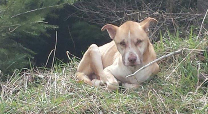 Как спасти озлобленную и одинокую бродячую собаку