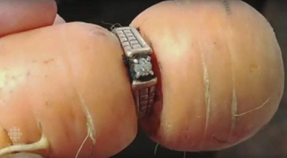 Жительница Канады отыскала вморкови потерянное 13 лет назад кольцо