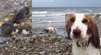 Собака спасла дельфинёнка от гибели на берегу