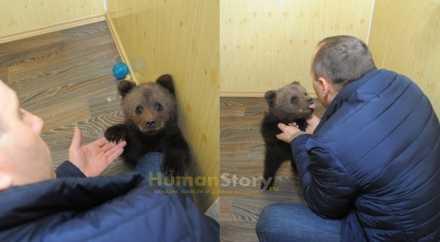 2-месячного медвежонка, найденного в Перми, взяли в городской цирк