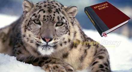 Красную книгу России переиздадут в 2015 году
