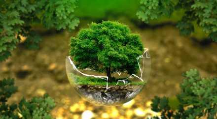 Растения замедлили прирост углекислого газа в атмосфере Земли
