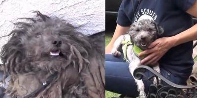 Как подарить бродячей собаке новую жизнь. Доброе видео