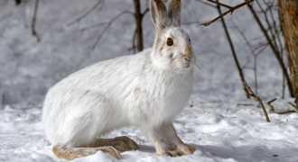 В Челябинске смелый заяц пришёл в гости к людям. Доброе видео