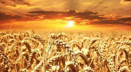 Россия становится мировым лидером рынка зерна