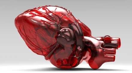 Во Владимире в течение года могут создать искусственное сердце