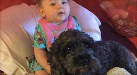 Собака ценой собственной жизни спасла от огня 8-месячную малышку