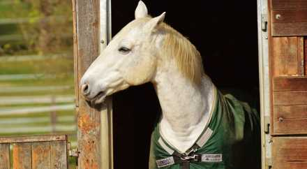 Норвежцы выяснили, что лошади могут освоить язык знаков