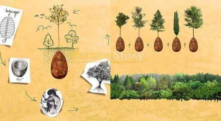 В Италии на кладбищах будут выращивать заповедные рощи
