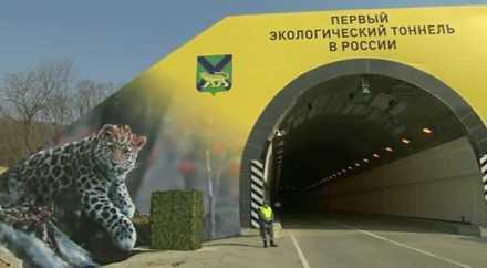 В России появился автотоннель, защищающий дальневосточных леопардов