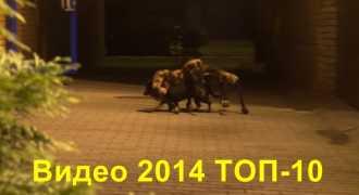 Лучшее видео 2014
