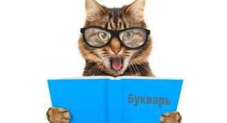 Учёные из Швеции начали изучать кошачий язык