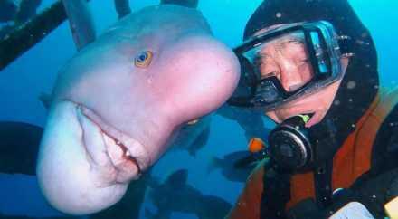 Японец 30 лет дружит с «человекоголовой» рыбой