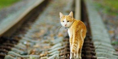 Машинист из Голландии остановил поезд ради спасения кошки