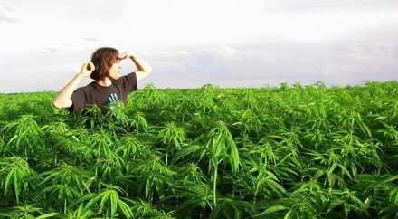Легализация марихуаны в США себя не оправдала