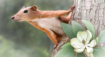 Предки человека обитали на деревьях