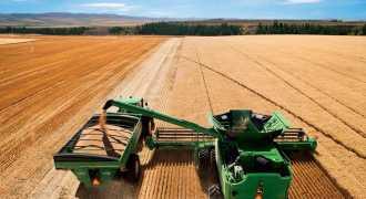 В России начали снижаться цены на пшеницу