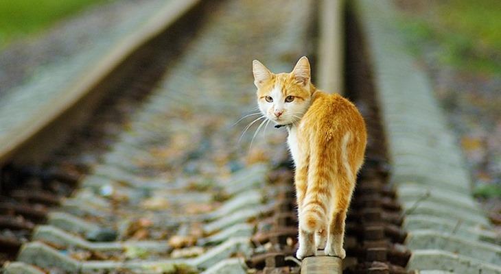 кошка по рельсам картинки это